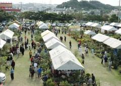 Green Fest plant market is held at Okinawa City Farmers Training Center in Noborikawa, on a field next to the popular JA Farmers&#039; Market.