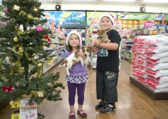 Makeman Mihama's Pet Fair offers a wide variety of pets, pet products and services at bargain prices through Christmas Day.