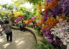 Thousands of orchids of every imaginable variety line the pathways of the Tropical Dream Center of the Ocean Expo Park as visitors have their photos taken in front of the exotic flowers.