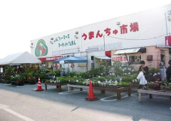 """Farmers' Market """"Umanchu Ichiba"""" occupies the largest building within Itoman Michi-no Eki area, and sells everything from fresh vegetables to garden plants."""