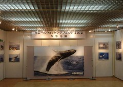 The Whale Watching photo exhibition is held in Tembus Gallery.