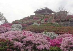 Hills at Higashi Village Azalea Park are now at their most colorful.