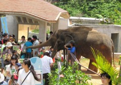 Children greet the zoo&#039;s elephants.