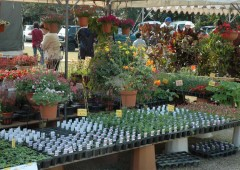 Plants and flowers of every variety are on exhibit and sale at the annual Plant Fair at Okinawa Farmer Training Center in Noborikawa starting June 7.