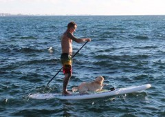 SUP board offers a completely new perspective to experience the ocean.