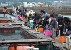 Visitors to last year's event take part in feeding the fish that is grown in floating cages.