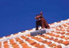 Almost every rooftop on Okinawa has a shisa standing watch.