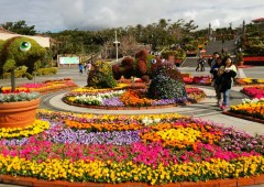 300,000 blooming plants are used to dress up the area around the Ocean Expo Main Square.