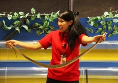 A female handler introduces a habu at Okinawa World Habu Museum.