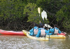 Visitors can rent kayaks o paddle along the mangroves for a close look.
