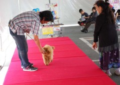An expert dog trainer shows owners tricks of his trade.