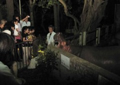 Night time visitors greeting the hippo.