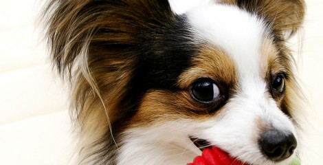 ood oral hygiene is important to your pet's wellbeing.