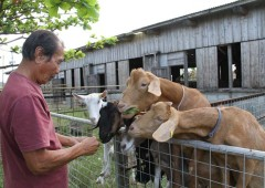 Hagoromo Farm owner Masahide Shinjo is convinced that goat farming has a great future is the marketing is done right.