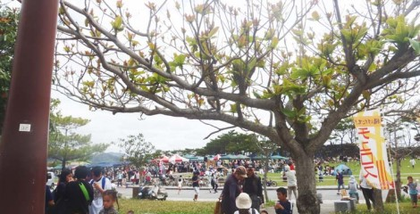 The venue for the event is the 21st Century Forest Park in Nago.