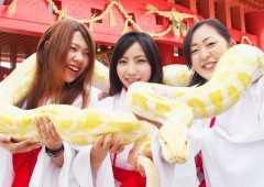 A picture with a white python is definitely a photo with difference.