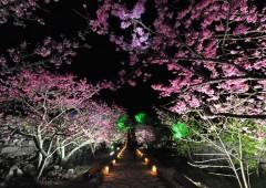 The stone path to Nakijin Castle in night illumination is a beautiful sight.