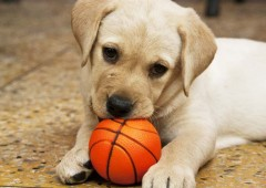 Puppies are cute, but can cause trouble that the new owners should be aware of before purchasing.
