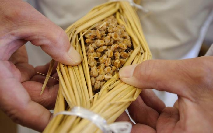 Natto in a traditional packaging made of rice straws.