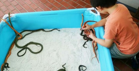 Catching and holding many snakes at one time is not that easy.