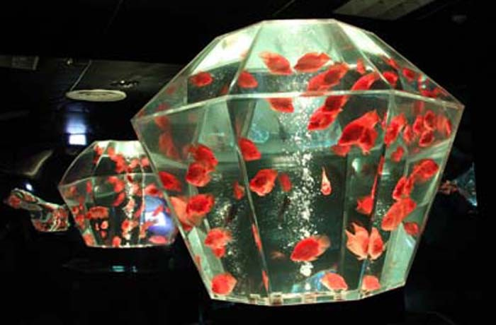 Art Aquarium exhibition centers on goldfish and various shape aquariums to create a very Japanese harmonious atmosphere.