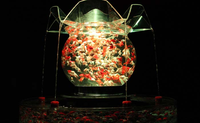 Over 5 million people have visited the Art Aquarium exhibit at various places around the world.