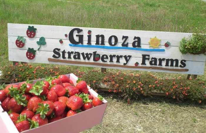 Ginoza Strawberry Farms is the only place on Okinawa to grow strawberries.