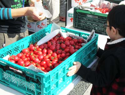 Free mini tomato grabbing event is one of the highlights of the festival.
