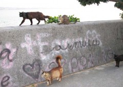 Stray cats are taking over the Sunabe Seawall thanks to ignorant people feeding them.