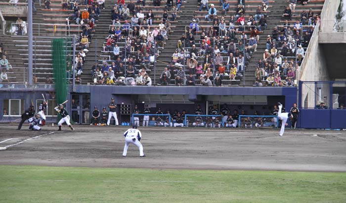 Fans of Yakult Swallows line the seats watching a training match at the team's spring camp in Urasoe.