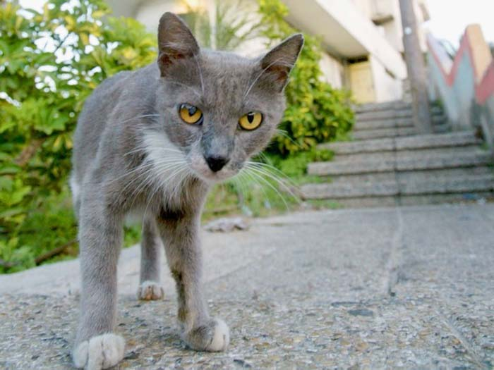 Stray cats are not a problem once they are neutered.