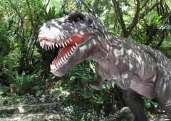 Dino IMG_6369