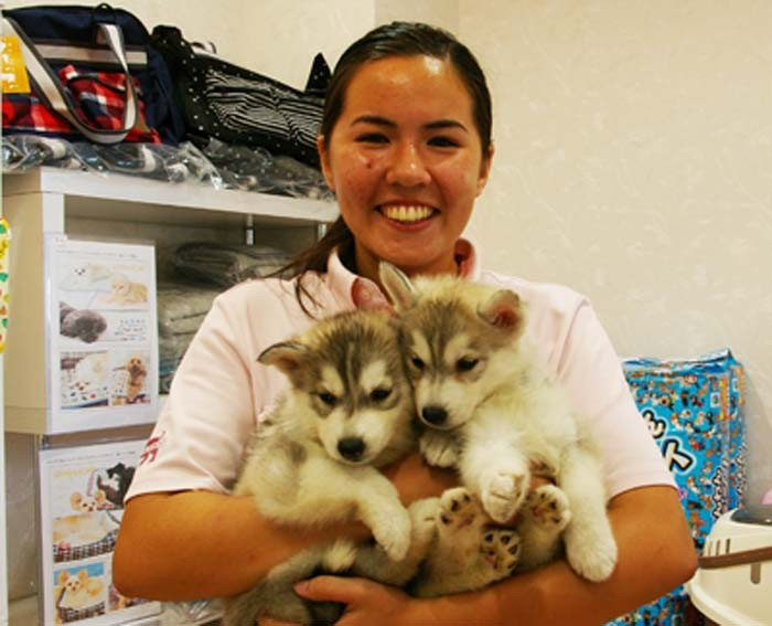 Risa Taba is one of the bi-lingual staff at Happiness pet shop.