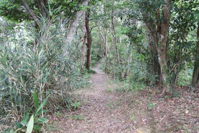 There are many trekking trails on the hills of Central and Northern Okinawa.