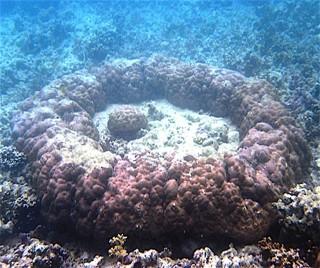 Microatoll off Australian coast.